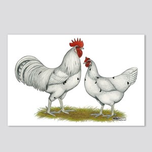 Austra White Chickens Postcards (Package of 8)